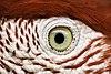 Eye of the Bird.jpg