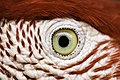 Eye of the Bird.jpg