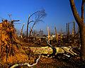 FEMA - 20629 - Photograph by Win Henderson taken on 12-07-2005 in Kentucky.jpg