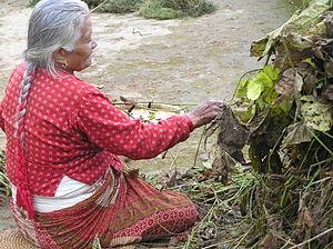 Dalchoki - A women plucking Soyabeans
