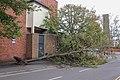 Fallen Tree in Dormer Place, Leamington Spa.jpg