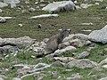 Fauna als Engorgs (juliol 2013) - panoramio.jpg