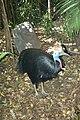 Fauna de Australia33.JPG