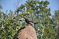 Feral pigeon in Nizhny Novgorod 04.jpg