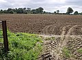 Field at Hummer - geograph.org.uk - 542903.jpg