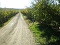 First fruit 2 - panoramio.jpg