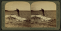 Fisherman at lake turning to cook in a boiling spring the trout just caught, Yellowstone Park, U.S.A, by Underwood & Underwood.png