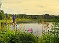 Flickr - Per Ola Wiberg ~ mostly away - flowers by water (1).jpg