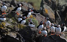 Birds on rocks