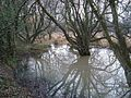 Flooded land by Templer Way - geograph.org.uk - 1412051.jpg