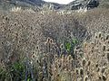 Flora Parque Nacional Lihué Calel.jpg