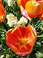 Floral photography - Photo by Giovanni Ussi 20.jpg