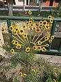 Flors als jardins del Parque de las Musas de Chiclayo.jpg