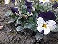 Flower20180125 151126.jpg
