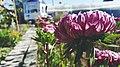 Flower (107194577).jpeg