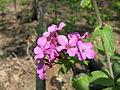 Flower 37 (6987945007).jpg