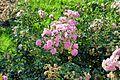 Flower 81 (8072754673).jpg