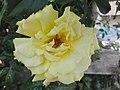 Flower Dortmund 17.jpg