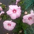 Flower HK.jpg