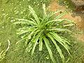 Flower Tree 4.jpg