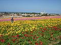 Flower feld 9.jpg