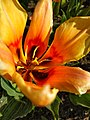 Flower photography - Photo by Giovanni Ussi 12.jpg