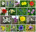 Flowers-of-Israel-ver004.jpg