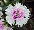 Flowers - Uncategorised Garden plants 147.JPG