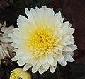 Flowers - Uncategorised Garden plants 301.JPG