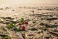 Flowers In Tideland (65675465).jpeg