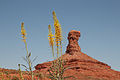 Flowers on Potash Road, Moab.jpg