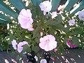 Flowerses - panoramio.jpg