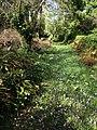 Flowery path, Parke - geograph.org.uk - 1208682.jpg