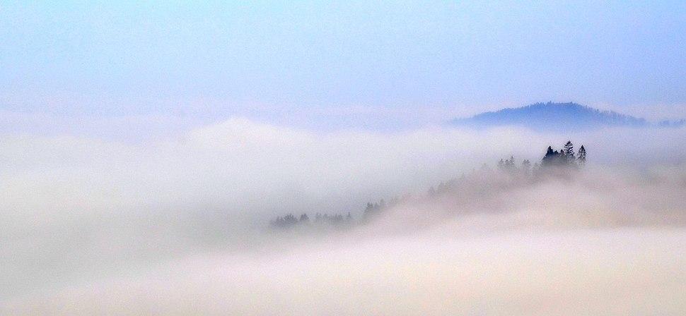 Fog in Sauerland, Germany