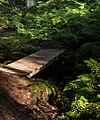 Footbridge and ferns in Gullmarsskogen ravine 1.jpg