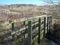 Footbridge over small stream - geograph.org.uk - 1166776.jpg
