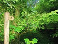 Footpath, Top Carpark, Colby Lodge - National Trust Gardens - geograph.org.uk - 1370023.jpg