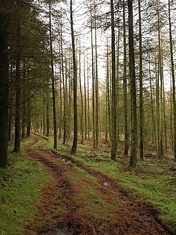 Footpath in Buncombe Wood - geograph.org.uk - 1130069