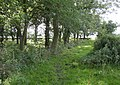 Footpath past Whitaker Pits Wood, Clifton - geograph.org.uk - 531852.jpg
