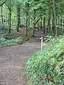 Footpath to Swallow Tree Gardens - geograph.org.uk - 566905.jpg