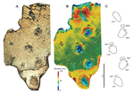 Footprints of Large, Triassic dinos in Greenland.png