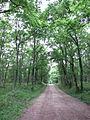 Forêt de Buzet 2014-05-08T13-53-13.jpg