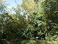 Forest. Beliczay Island. - Érd, Hungary.JPG