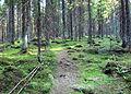 Forest in Jyväskylä 2.jpg