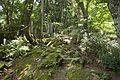Forest in Mt.Kaba 02.jpg