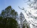 Forest park - panoramio - tsushima.jpg