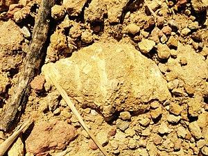 Fosil Sierra de Irta Comunidad Valenciana.jpg