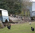 Free range poultry on an improvised perch - geograph.org.uk - 736303.jpg