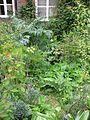 Front garden - Flickr - peganum (4).jpg