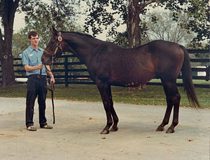 Gallant Man - Gallant Man at Spendthrift Farm in 1981